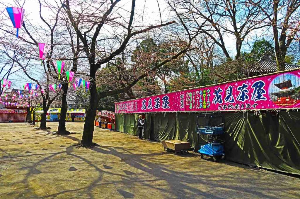 2016sakura05