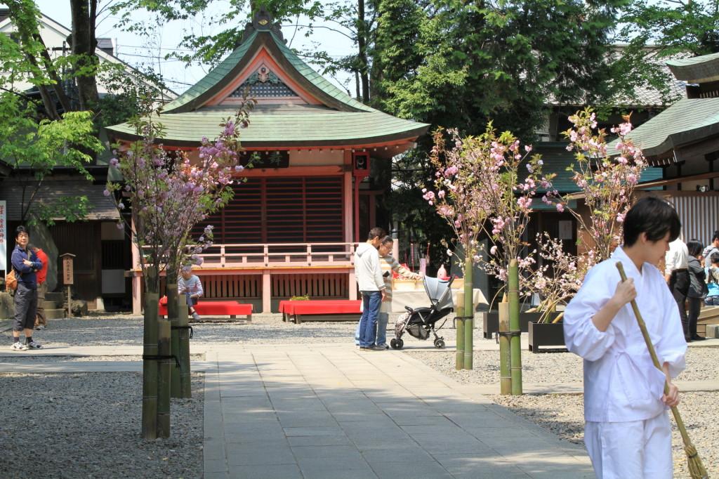 川越の風景「川越氷川神社」 写真をアップしてみました。